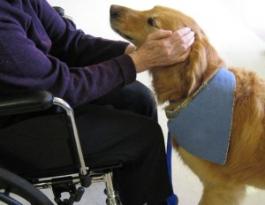pet_assisted_therapy