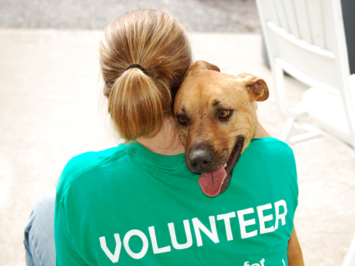 volunteer positions humane society of catawba county