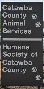 Catawba County Humane Society Cats