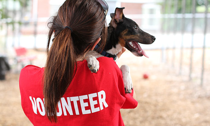 volunteering with animals Volunteering at wayside waifs is a rewarding experience  but by the selfless  acts they contribute to make life better for homeless companion animals.