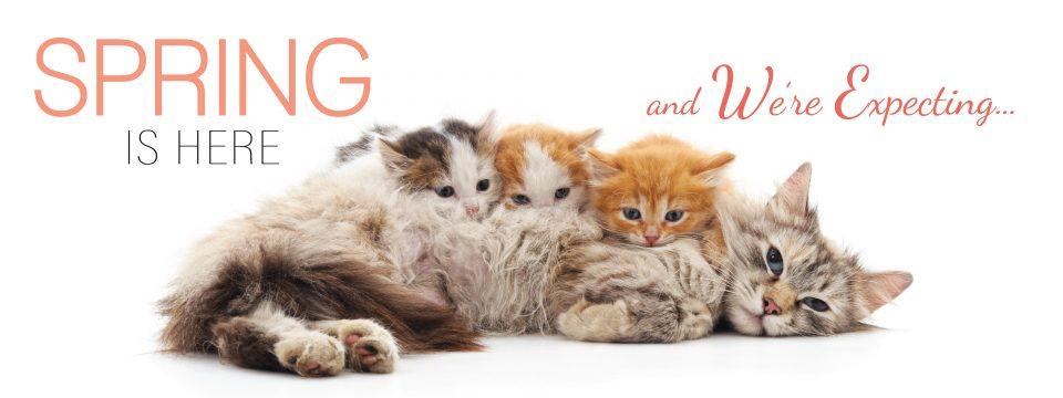 Kitten Season is coming!